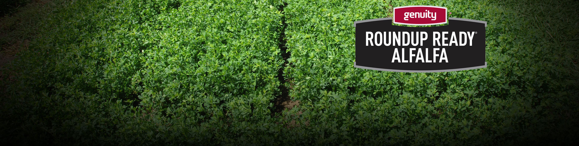 Over 50 years of progress and technical advancement in forage solutions.